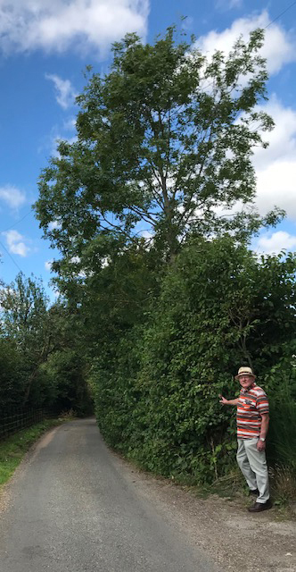 Bob Baxter beside the Millennium Hedge in August 2020 Anniversary