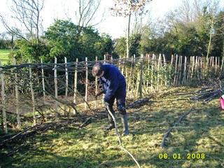 Project Leader, John Jackson demonstrating hedgelaying techniques